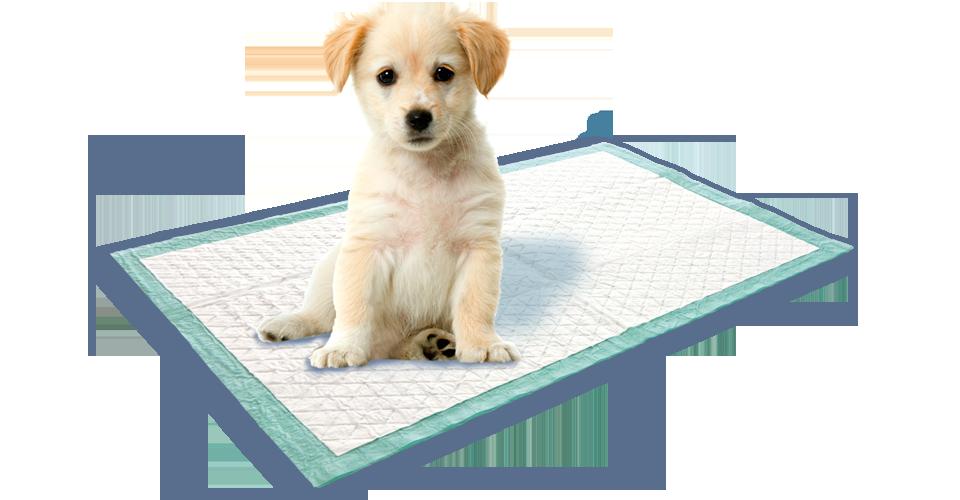 Puppy training mat from Swirl®